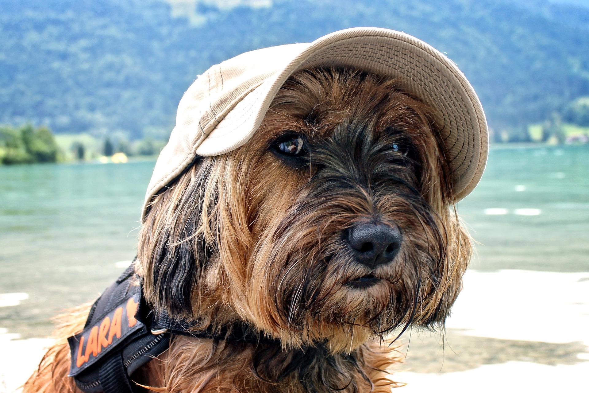 dog-858646_1920_Meldung_Urlaub