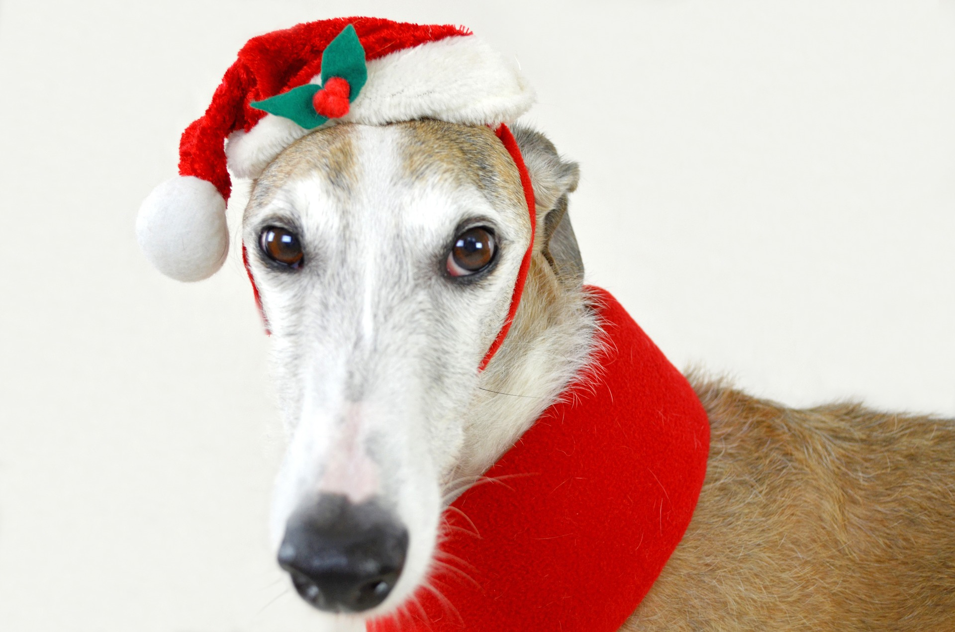 dog-983023_1920_weihnachten