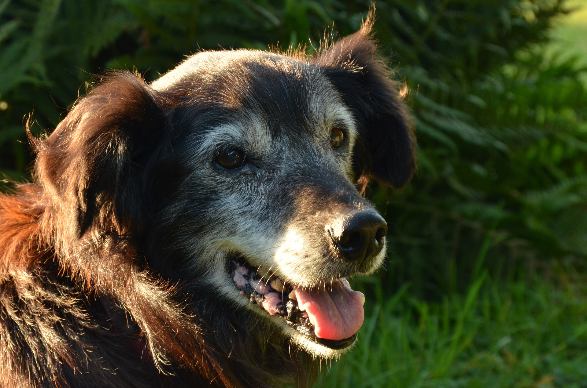 dog-1655150_1920