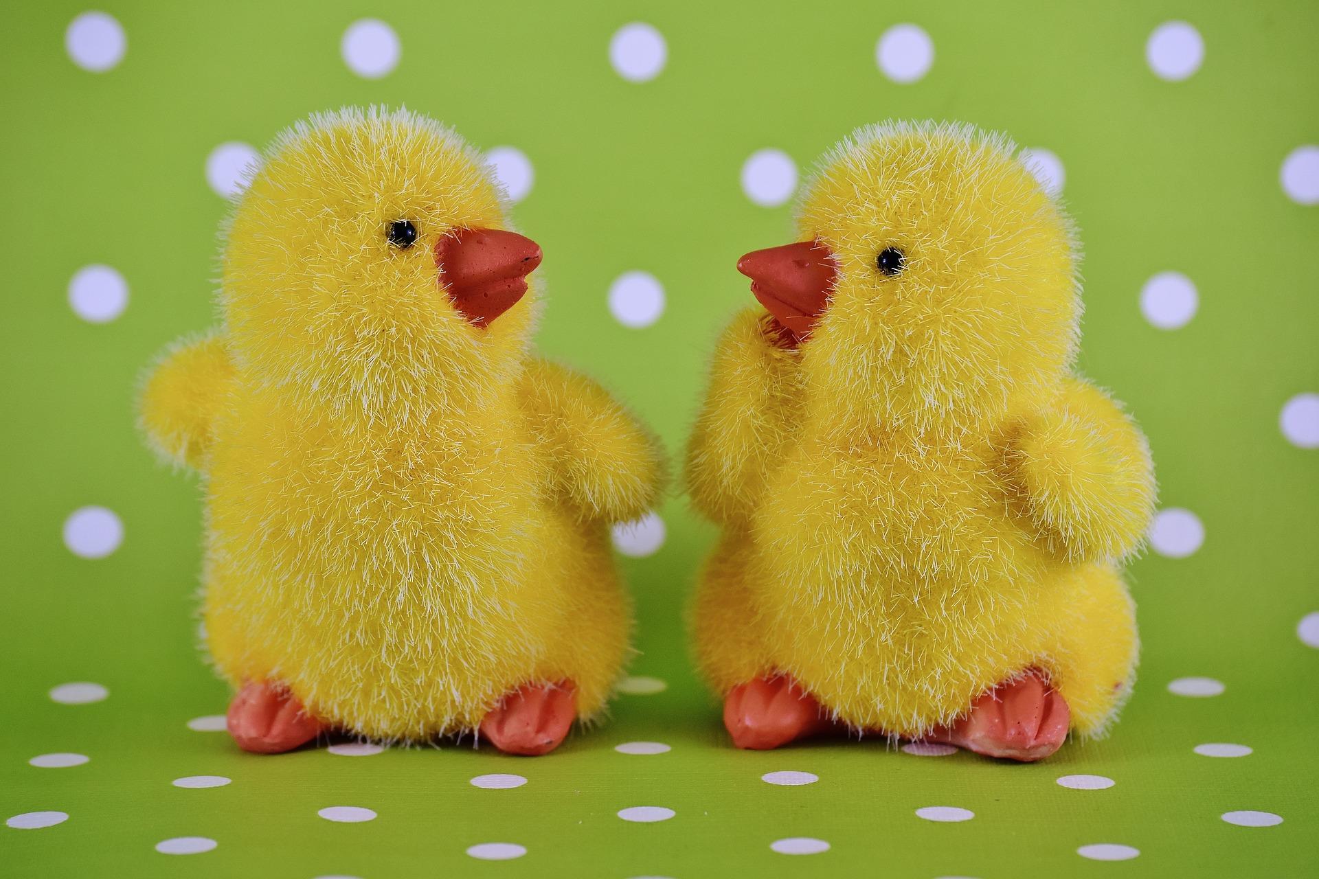 chicks-2093810_1920