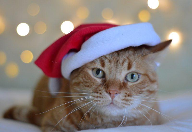 Katze Weihnachten2018