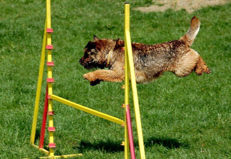 Hund Agility