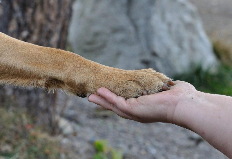 Zusammenhalt Hundepfote