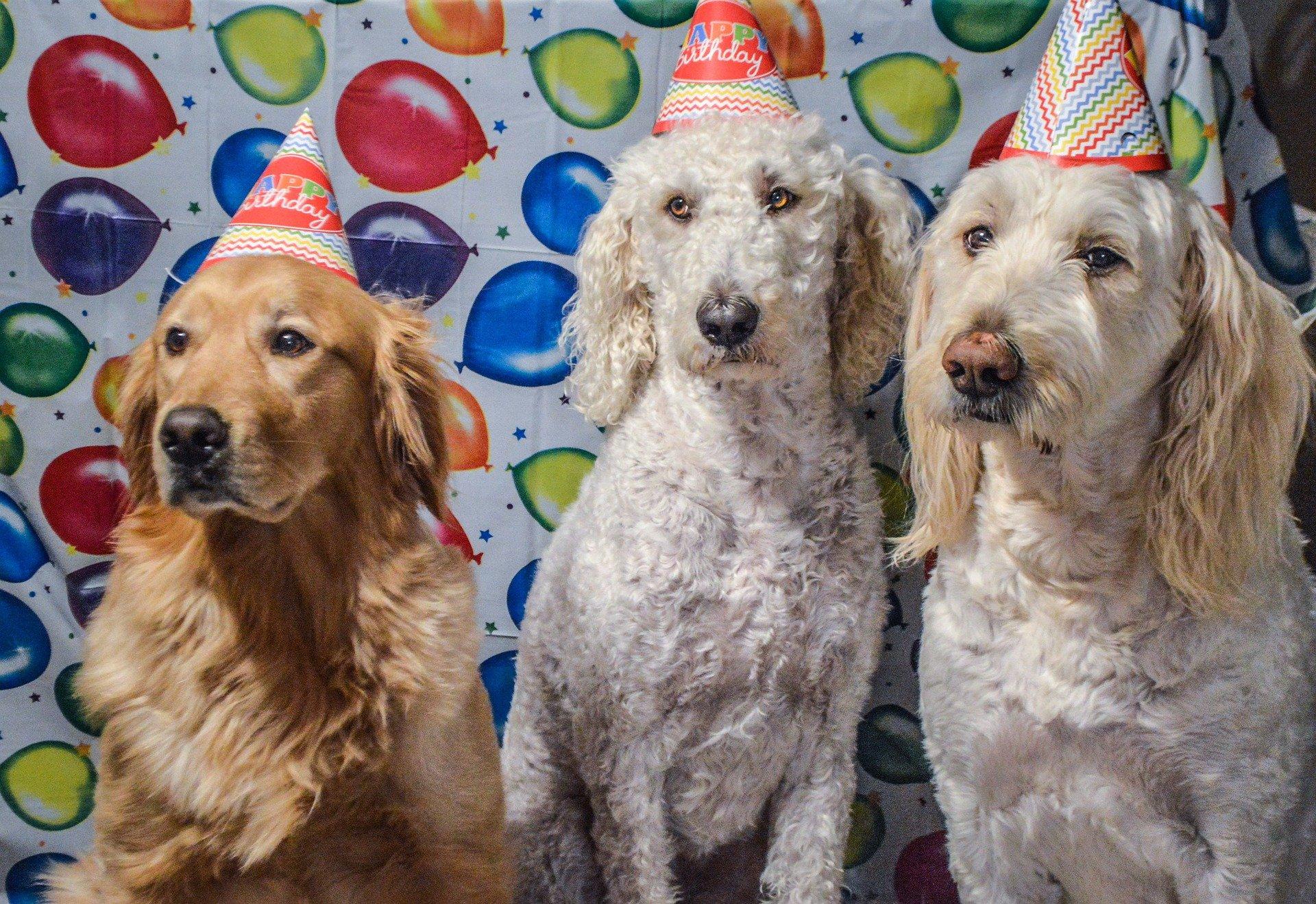 Hunde Party