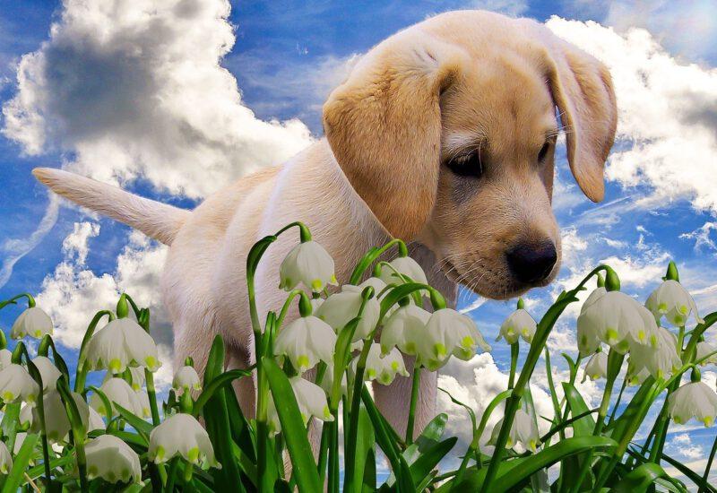 Hund Schneeglöckchen