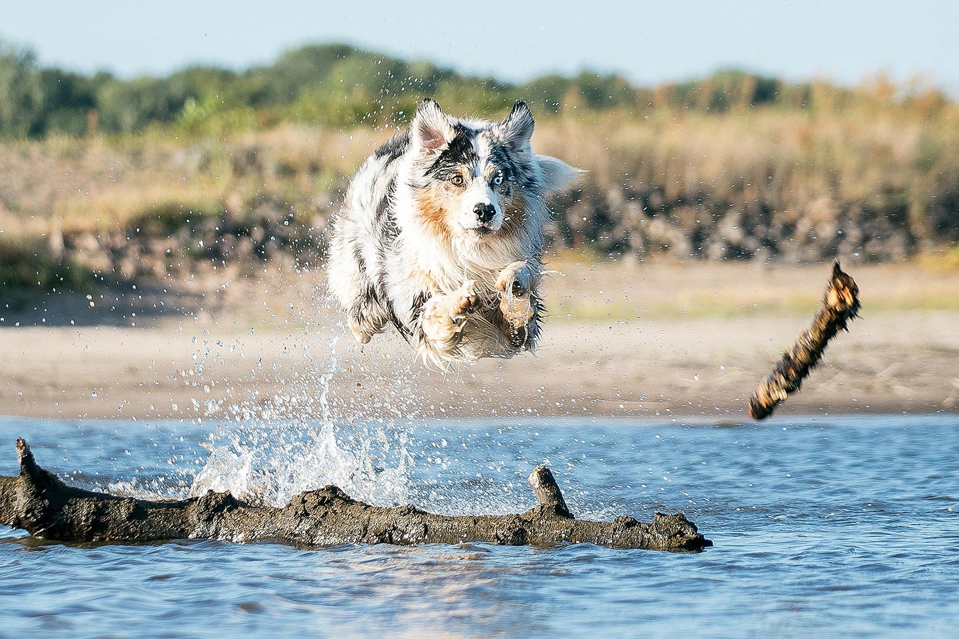Hund Suche Physiotherapie