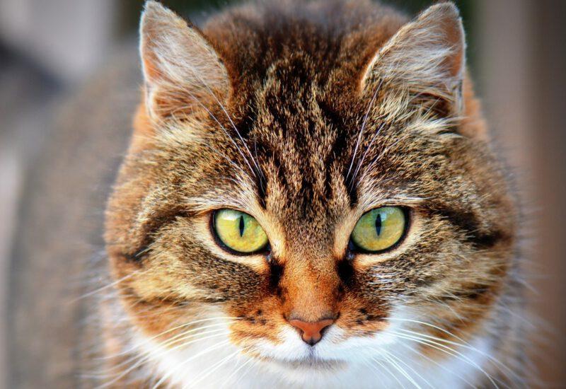 Cat 300572 1920